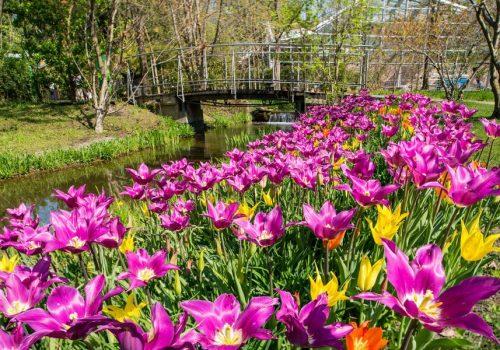 Trauttmansdorff_-_Le_fioriture_in_primavera_9_c45ac1408c.jpg